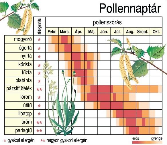 pollennaptárnyomtatható