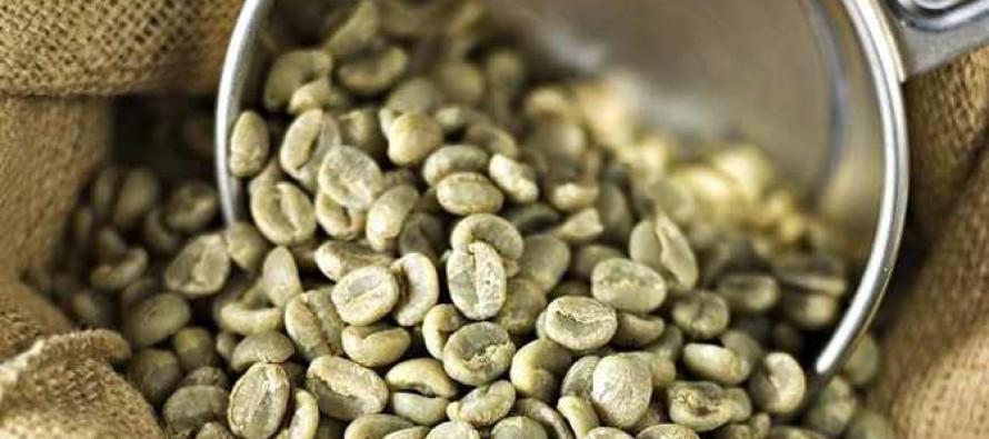 A zöld kávé hatásai