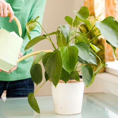 bring-calm-plants-home-400x400