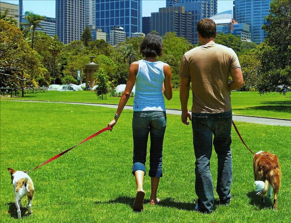 Couples-walking-with-dog1