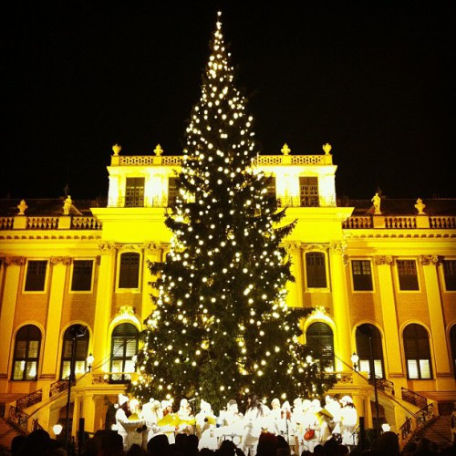 christmas-tree-schonbrunn