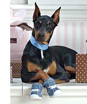 kutyacipő1