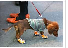 kutyacipő2