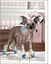 kutyacipő3