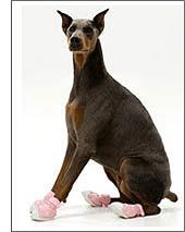 kutyacipő4