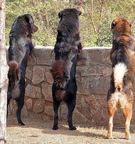 kutyalátás2
