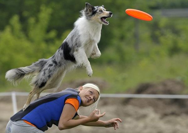 Hungary Dog Frisbee Race