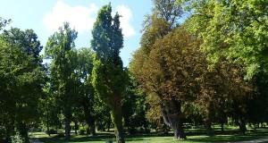 Fehérvárcsurgó Kastély Park